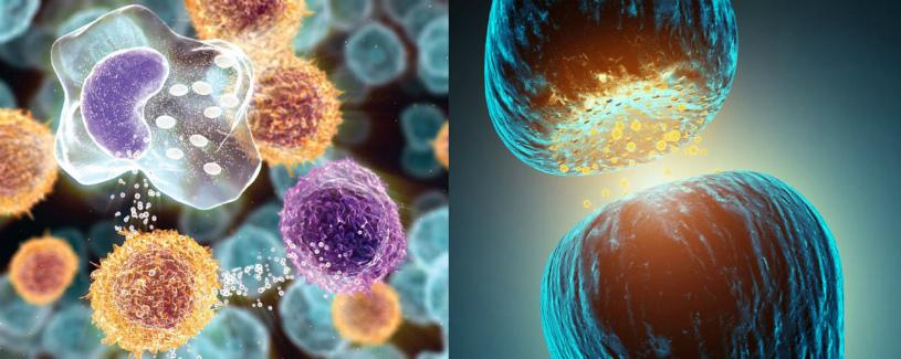 Заболевания иммунной системы симптомы