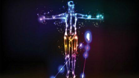 Иммунная система человека строение и функции