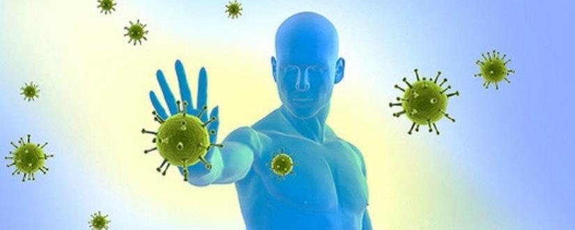 теории иммунитета основной вид иммунитет человек
