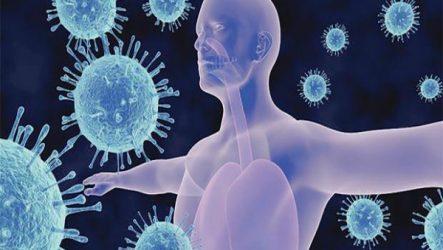 Особенности функций иммунной системы