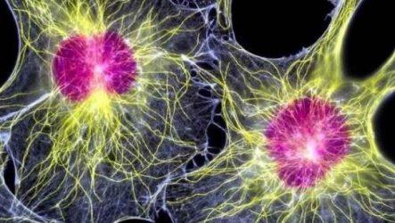 Иммунитет растений без лекарств