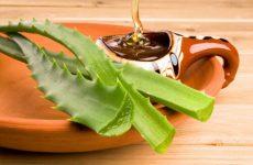 Рецепт алоэ с медом для иммунитета