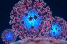 Какое явление называется иммунитетом