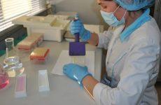 Центр корректировки иммунитета спб