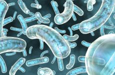 Клетки иммунной системы