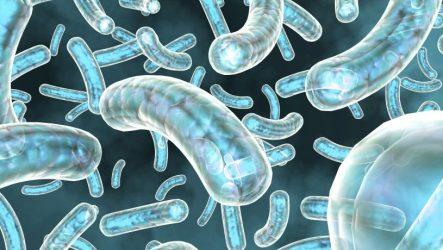 Дефекты иммунной системы